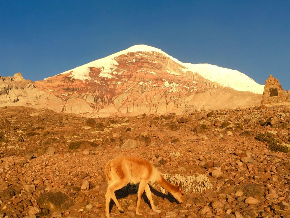 """Base camp Refugio. We leave at 10 PM and should summit sometime around 7 AM...""""If you don't give up like the German guy I guided last week"""" says my guide. No pressure, this vicuna isn't feeling the altitude at all."""