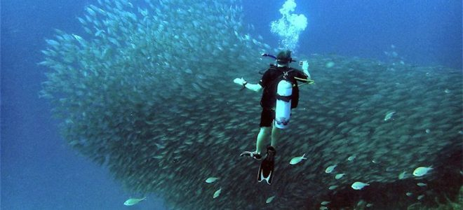 Diving into Bonaire, the B of the ABC Islands