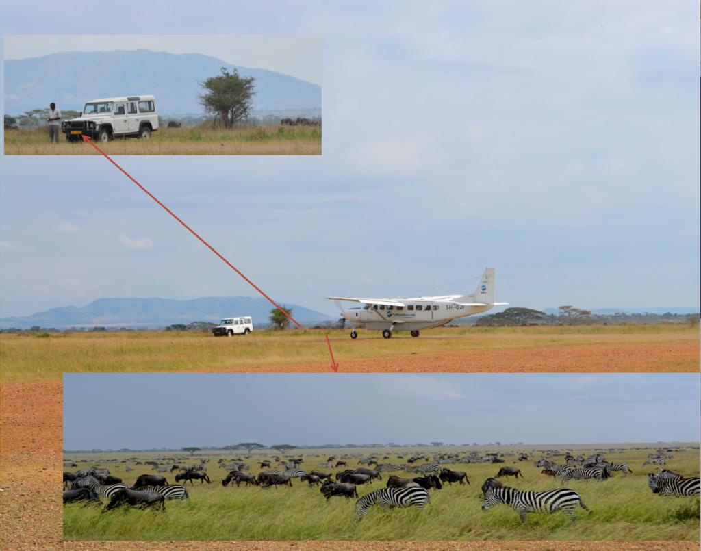 Plane:Migration